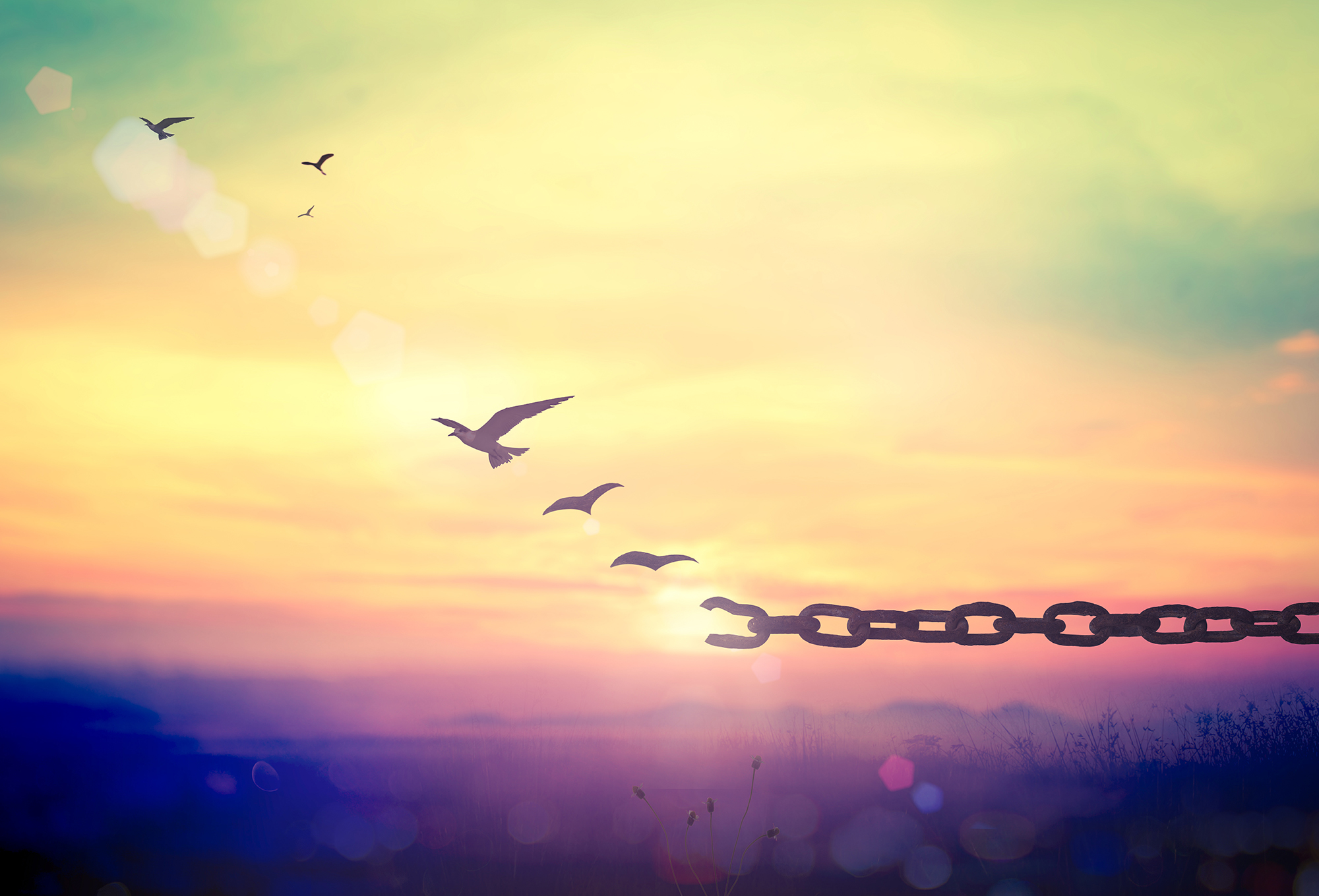 FEAR/FREE